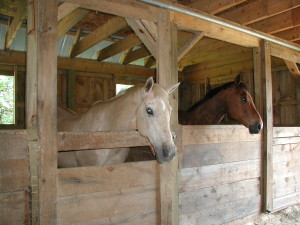business organization for equestrian offices